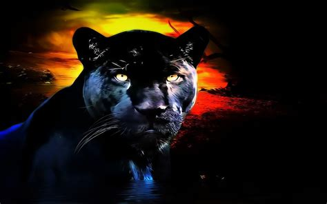 panther wallpaper  background image  id