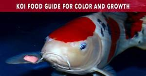 Koi Food Guide Maximize Color And Growth
