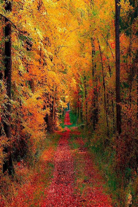 autumn woods and road wallpaper free iphone wallpapers