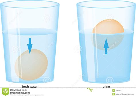 Eggs That Sink In Water by Egg And Water Stock Vector Image Of Down Salt Float