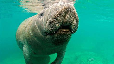 animales en peligro de extincion  extintos  en mexico