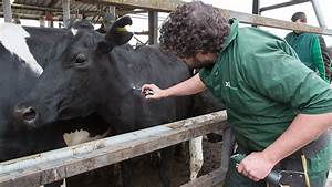 Breakthrough In Quest For Tb Cattle Vaccine