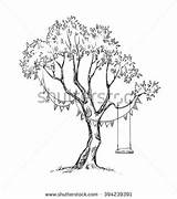 Swing Tree Coloring Sketch Realistic Draw Drawing Trees Dreamy Drawings Vector Plants Garden Sketches Shutterstock Bushes Designlooter Vectors Hammock Google sketch template