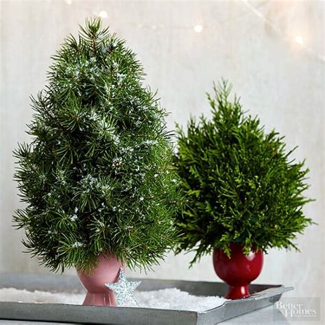 best fragrant christmas tree 10 tabletop trees