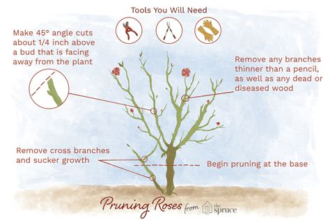bathroom staging ideas how and when to prune roses