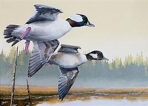 Odfw 2018 Waterfowl Stamp Art Contest
