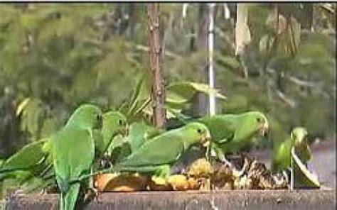 live wildlife birds streaming webcam in the atlantic