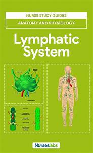 615 Best Lymphatic Health Images On Pinterest