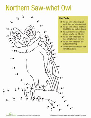 northern saw whet owl facts worksheet education