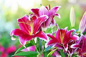 Winterharte Blumen Für Den Garten : berblick ber exotische pflanzen f r den garten ~ Whattoseeinmadrid.com Haus und Dekorationen