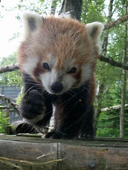 Panda Adorable Animals Animal Planet Pandas Friends
