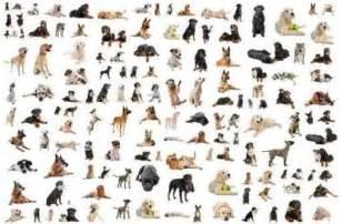 Dog Breed Chart