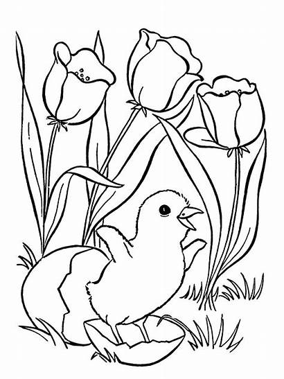 Coloring Pages Chick Flower Hatching Tulips Printable