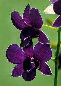 Purple orchids, Beautiful and Flower on Pinterest