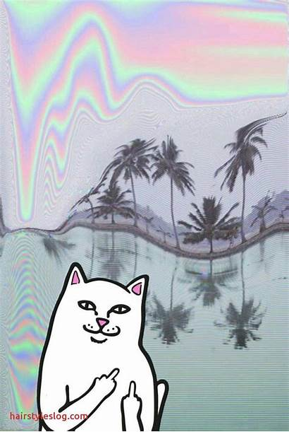 Ripndip Cat Wallpapers Iphone Background Finger Middle