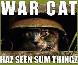 cat war casino war 2068 casino no deposit maze of handy
