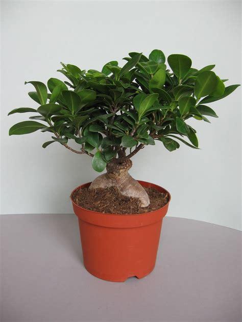 decoracion mueble sofa ficus bonsai