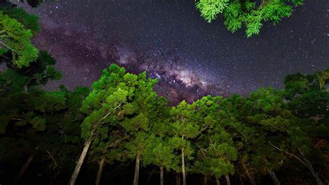 1920X1080 Night Sky Forest
