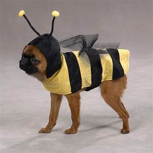 funny dog costume - make2fun