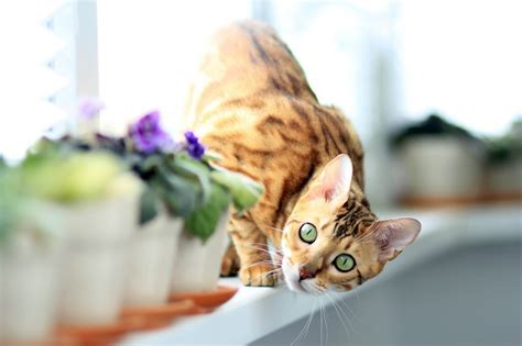5 Tips For Introducing An Adult Cat To A New Cat Catvills