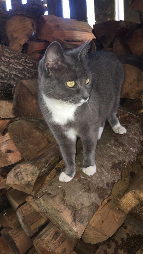 Found Cat  Marysville, Wa  Lost & Found Pets Wa State
