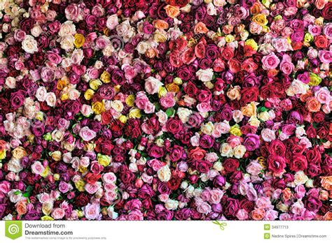 colourful rose background stock image image  wall