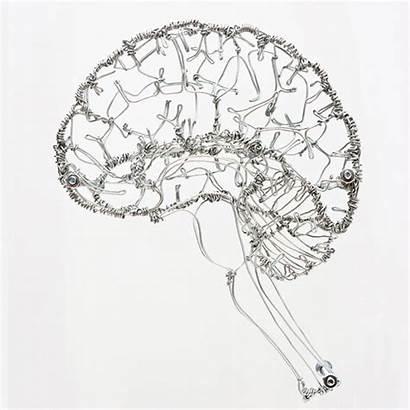 Brain Wire Sculptures Federico Carbajal Sculpture Anatomy