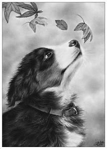 Autumn Puppy by Zindy on DeviantArt