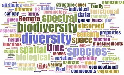 Biodiversity Word Cloud Definitions Sensing Remote Workshop