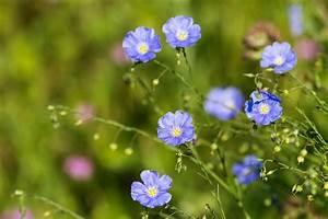 Was Sind Frühlingsblumen : bilder quiz fr hlingsblumen geolino ~ Whattoseeinmadrid.com Haus und Dekorationen
