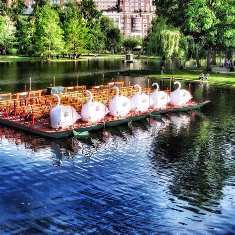 Swan Boats Charles River by 5 Pulseofboston Photos For Summer Adventure Inspiration