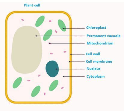 ncert solutions  class  science chapter  cell