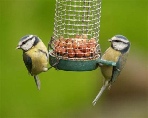modern bird feeders attract birds and add beautiful yard