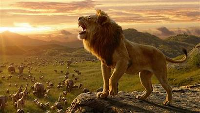 Lion King Simba 4k Wallpapers