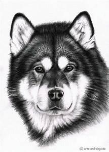 Alaskan Malamute Drawing By Nicole Zeug Wwwarts And