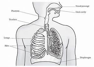 Respiration In Organisms
