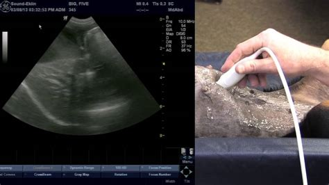 Veterinary Ultrasound Training  Scanning The Liver  Youtube. Sending A Business Email Solar Energy Studies. Colleges In Florida For Business. Travel Insurance Go Compare St Louis Toyota. Classic Insurance Agency Power Boat Insurance. Cable In Greensboro Nc Wells Fargo Short Sale. Logistics Certificate Online. Houston Community Colleges Jeep Cover Seats. Electrician Minneapolis Mn Cluster Mail Boxes