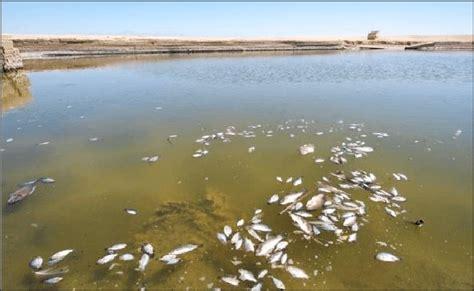acid rain  damage  fish  scientific diagram