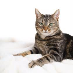 tabby cat personality names for tabby cats tabby cat names