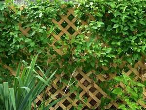 Treillis Pour Plantes Grimpantes : entretien de jardin facile conseils pour les jardiniers ~ Premium-room.com Idées de Décoration