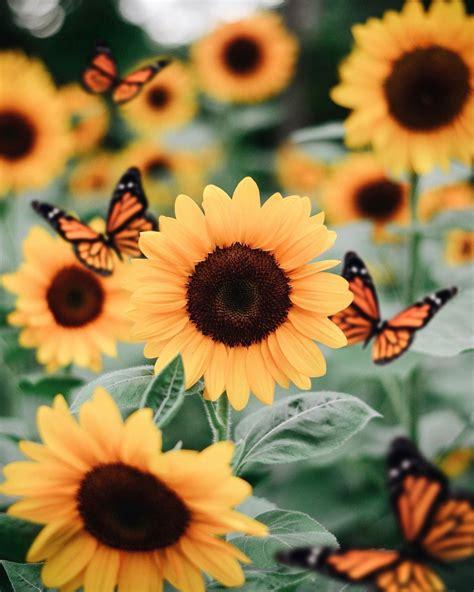 butterflies aesthetic wallpapers
