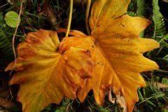 Calathea Blätter Rollen Sich Ein : sukkulenten bl tter werden weich woran liegt 39 s ~ Orissabook.com Haus und Dekorationen