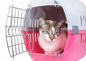 Caisse De Transport Chat Gifi : caisse de transport chat sant vet ~ Dailycaller-alerts.com Idées de Décoration