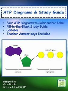 Atp Diagrams  U0026 Study Guide