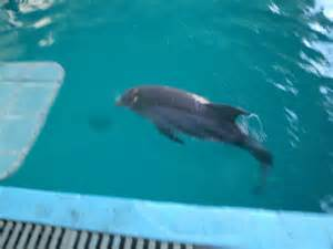 Bottlenose Dolphin Winter and Hope