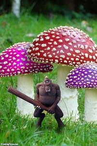 Mushroom Quotes And Sayings  Quotesgram