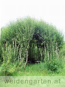 Wie Oft Muss Man Einen Kaktus Gießen : das dach von der weidenlaube aus purpurweide und grauweide wurde heuer wieder mit neuen ~ Orissabook.com Haus und Dekorationen
