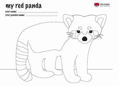 Panda Coloring International Mask Zoo Fact Birmingham