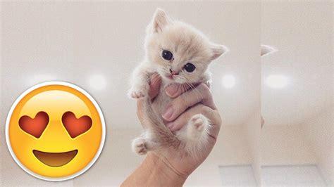 adorable kittens  youtube