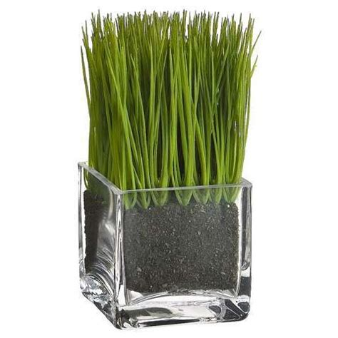 grass vase grass potted in glass square vase i would make it a bigger vase and maybe try to have it for